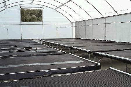 Typical propagating greenhouse
