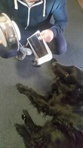 Dog kennel solar ventilator
